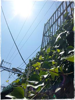 20100828_1257_Kawasaki.jpg