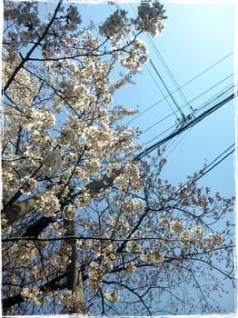20110406_1038_Tsurumi.jpg